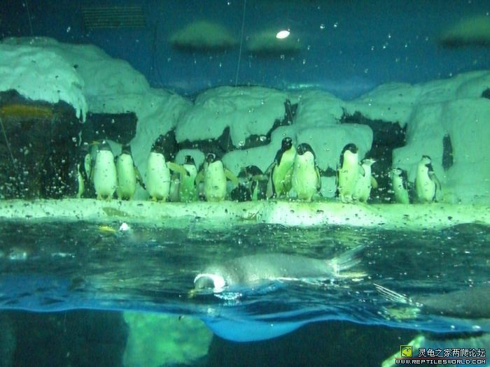 是大连动物表演最多,最好看的极地海洋馆