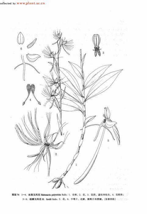 丝花制作方法图解