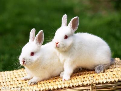 脑筋急转弯:兔子的一只耳朵最像什么?