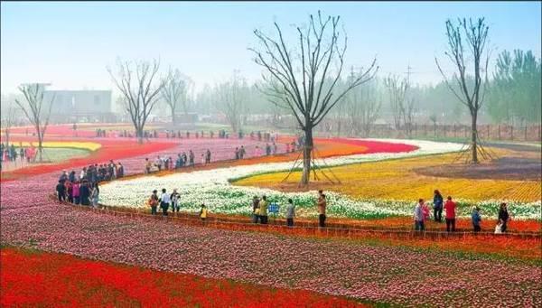 最美人间四月天 滨州经济技术开发区第四届郁金香节来袭