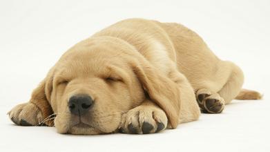 狗睡觉的时候怎么画?