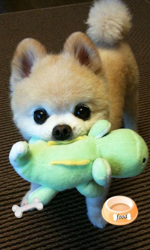【锁屏主题大意】   萌狗,萌猫,萌图,各种萌,各种可爱的小动物,总