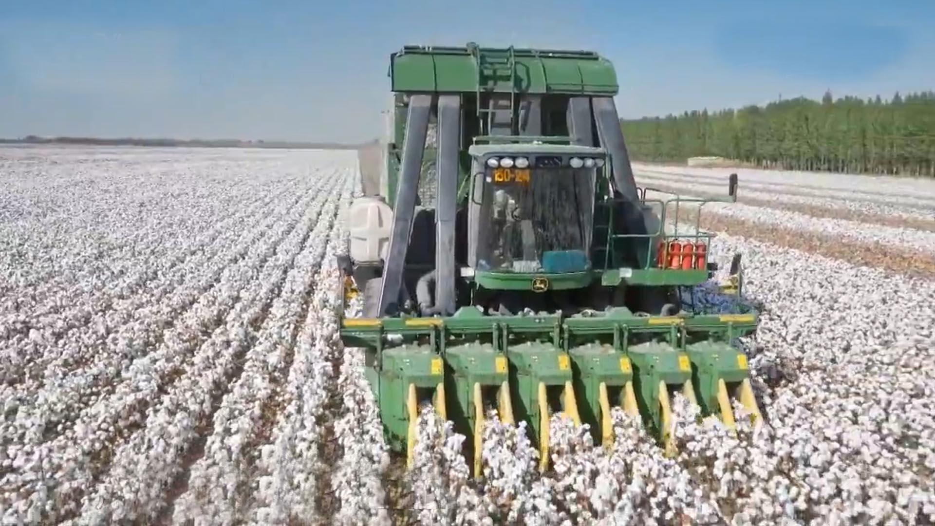 央视:我们有必须捍卫新疆棉花的硬核理由!