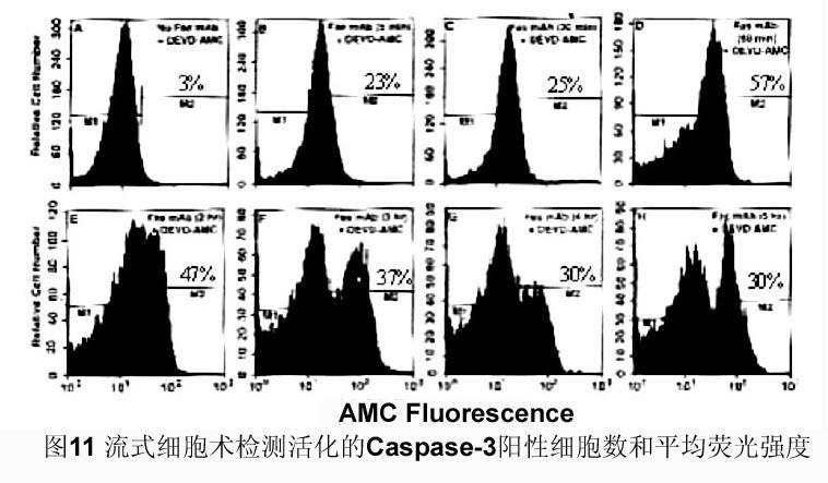 淋巴细胞的分离纯化以及组织细胞蛋白与核酸提取等实