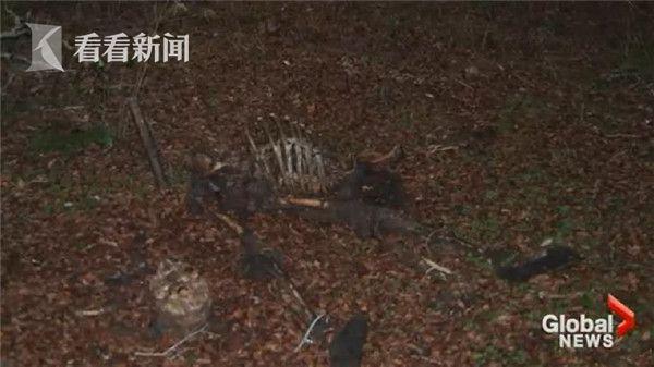 【转】北京时间      鹿吃人尸首次被拍:叼雪茄般叼着人骨 - 妙康居士 - 妙康居士~晴樵雪读的博客