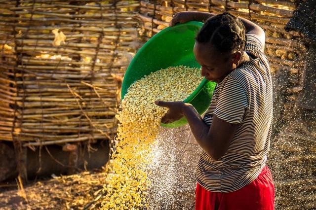 镜头下非洲农民的真实生活,农田被荒废,种子被当成现成的食物 -  - 真光 的博客