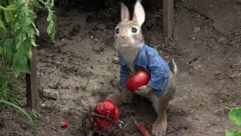彼得兔-淘气的兔子分工明确去偷菜园子,还是被女孩救了