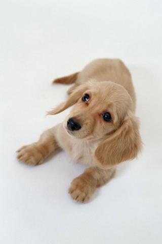 软件 壁纸主题 >宠物壁纸  应用介绍 一款可爱的宠物壁纸,希望你能