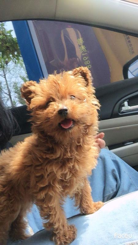 家狗狗是2个月泰迪 刚买4天 吃了点鸡腿肉 第二天发现食欲不振 什么