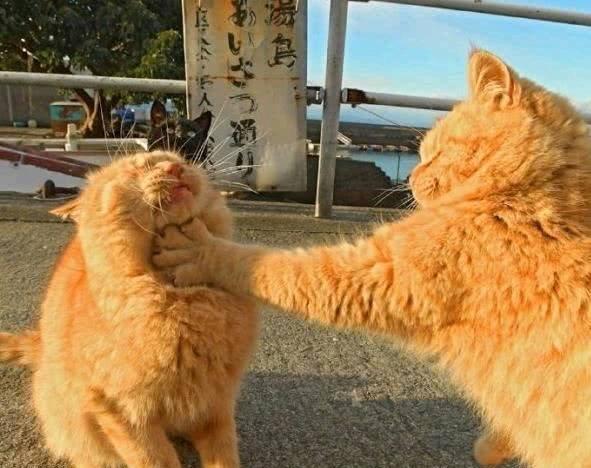 搞笑图片a猫咪猫咪笑话:你们两只图片在打架?要段子包可爱表情q版画大全图片