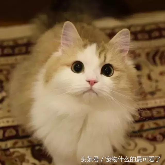 壁纸 动物 猫 猫咪 小猫 桌面 640_640图片