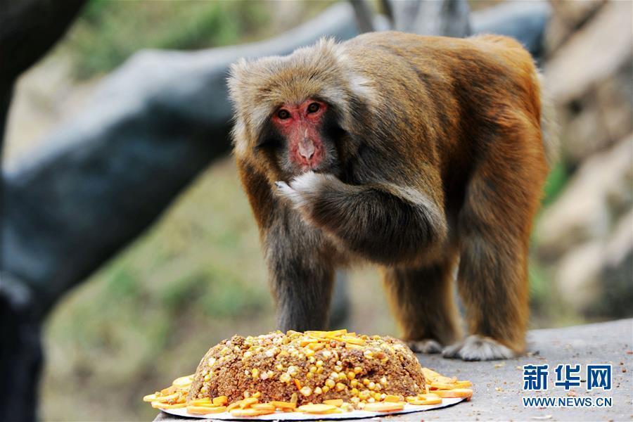 中秋节将至,一些动物园针对不同动物的食性,将天然食材加入馅料中