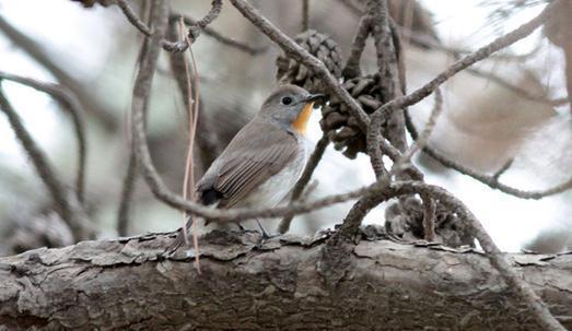 壁纸 动物 鸟 鸟类 雀 523_303