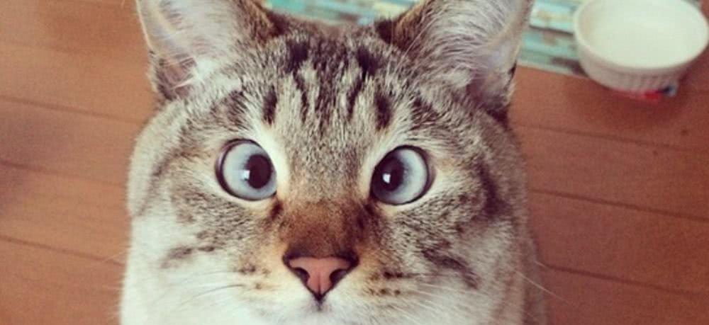 那些成为表情的猫咪微火叫原本?惊讶猫信名字包很动态表情的图片
