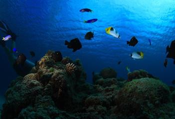 1000米海底突现一塑料袋,科学家探查后倒吸一口凉气