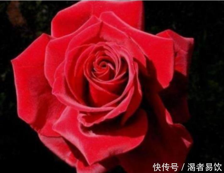 情感测试4朵玫瑰,哪朵代表真爱测你在他心里的重要性