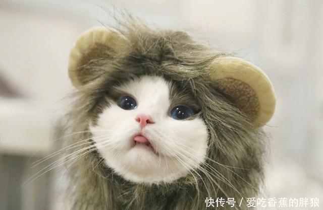 馒头最火的网红猫:表情全网打扰,第四位的表情仙女包别上榜我冬眠图片