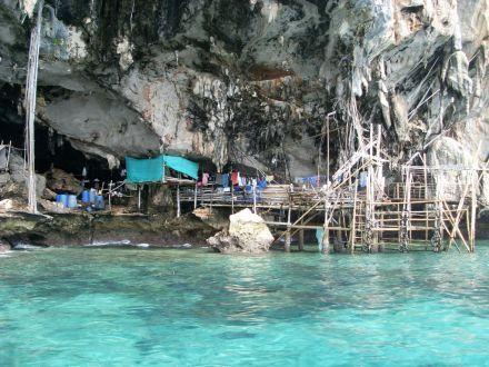 泰国海岛野生燕窝