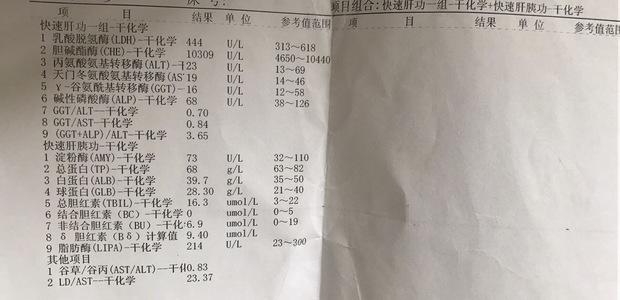 乙型肝炎病毒(HBV-DNA)定量 PCR_360问答