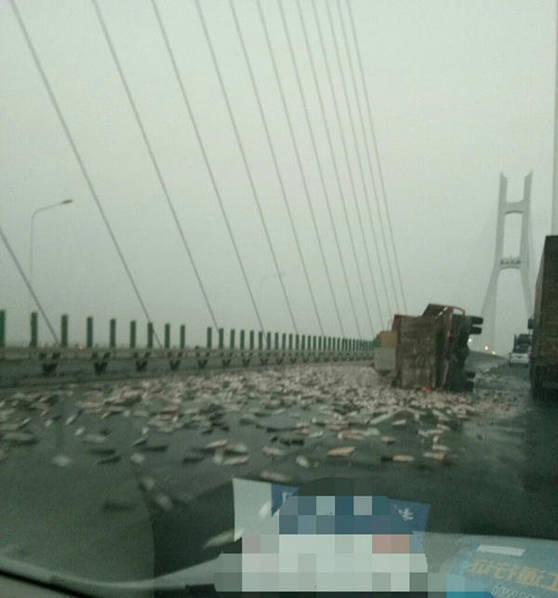 【转】北京时间      运鱼车大桥上侧翻 千斤鱼洒一地密集恐惧症误入 - 妙康居士 - 妙康居士~晴樵雪读的博客