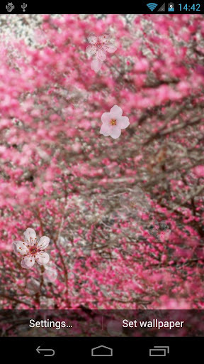 樱桃的花卉实时墙纸