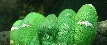 世界十大最美的蛇