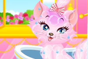 照顾美丽的公主猫