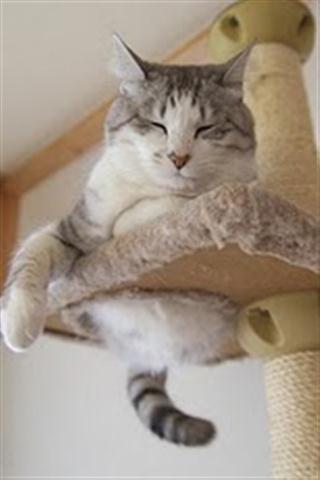可爱猫咪聊天背景手机