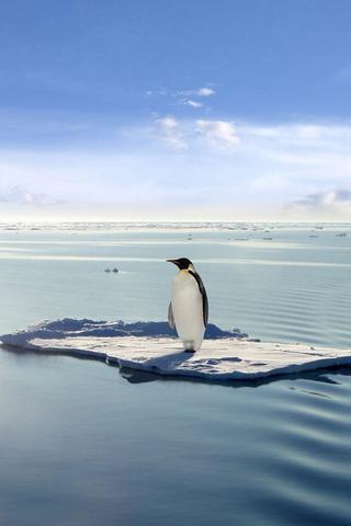 酷企鹅壁纸_360手机助手