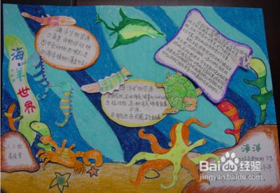 海洋动物小报图片