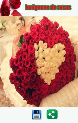 黑红玫瑰手机壁纸