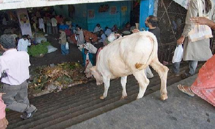 有关动物的十个谬误?
