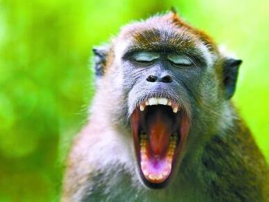 灵长类动物的发声能力之前被人们