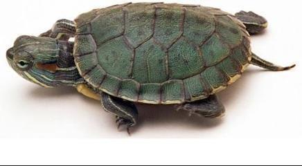 乌龟身体结构图片大全