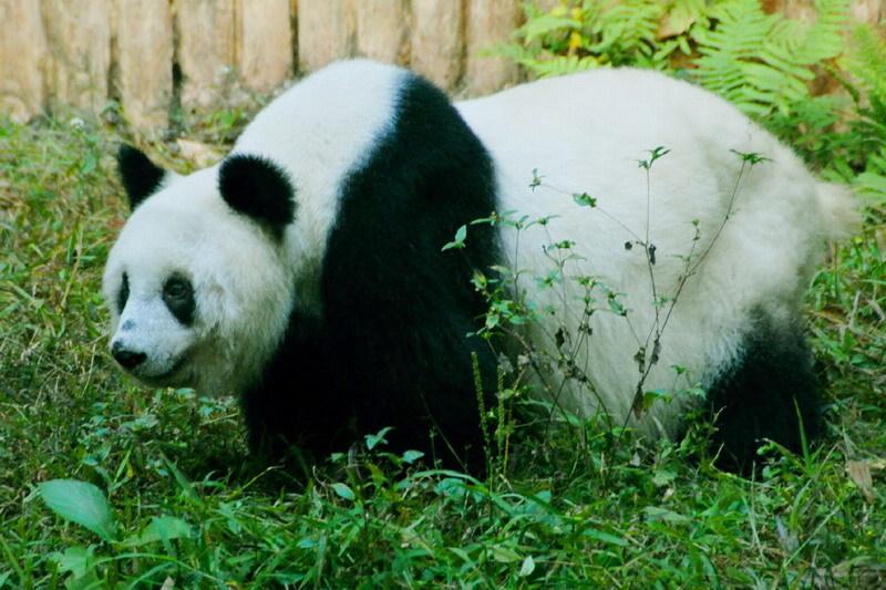 深圳市野生动物园是全国第一家由企业投资兴办的市政