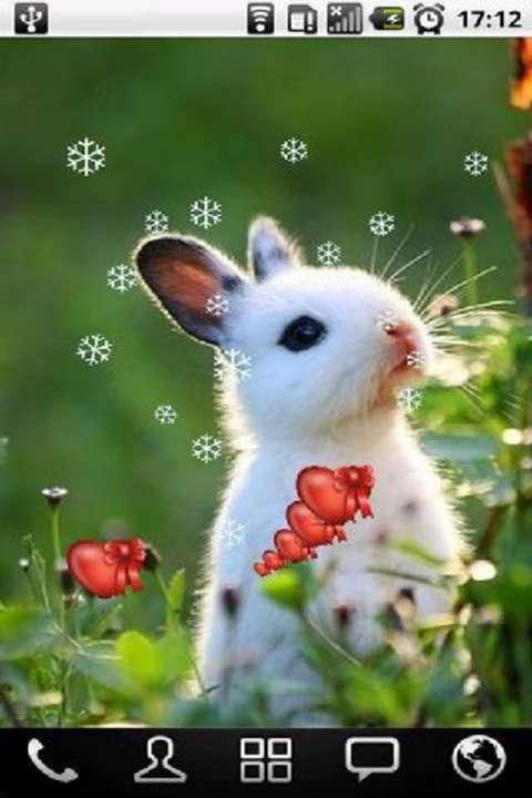 小白兔动态壁纸下载_v1.0