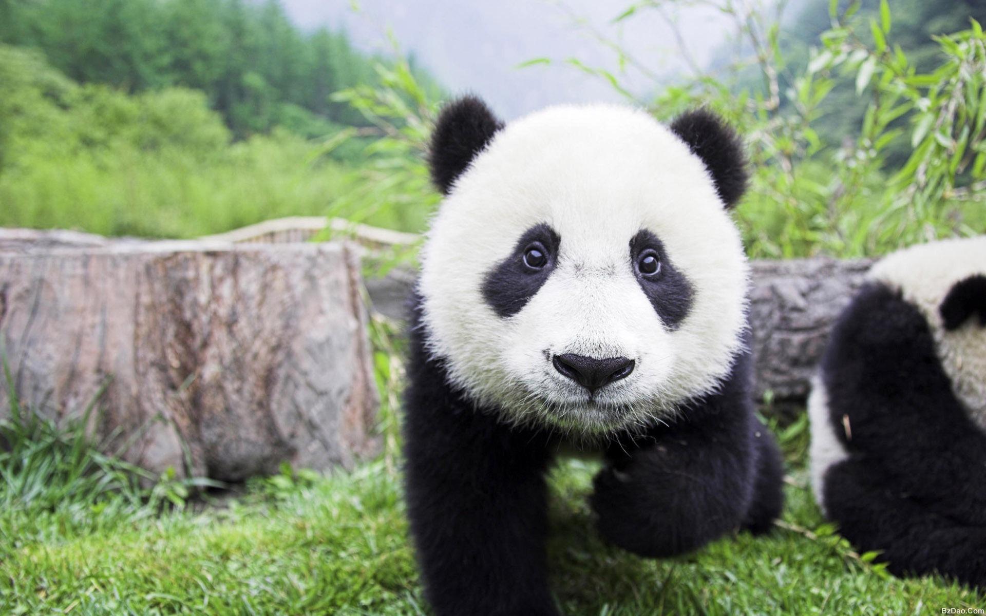 动物基金协会 logo是个熊猫