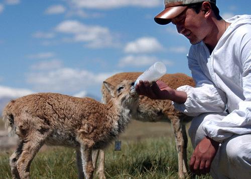 """中国野生动物保护协会等单位举办了"""""""
