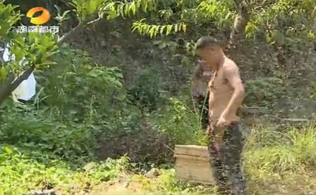 """挑战!株洲男子把十万只蜜蜂盔甲""""穿""""在身上 - 双梅 - 张静华"""