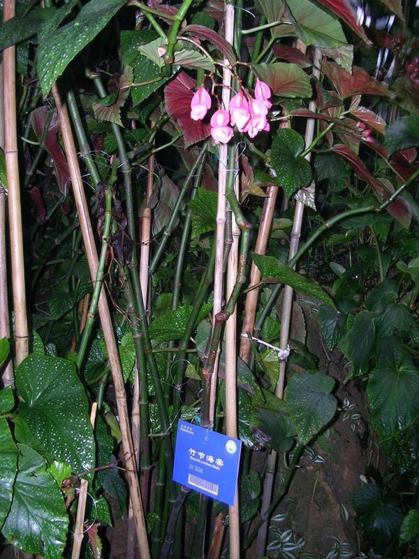竹节花织法图解