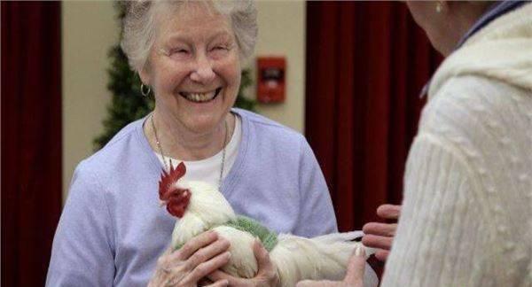 为了让母鸡多下蛋,美国给母鸡织起了毛衣_图1