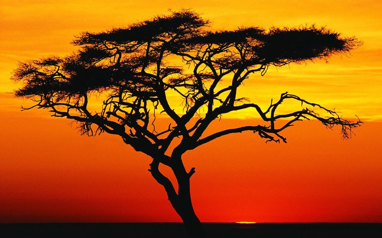 非洲/非洲