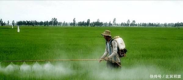 <b>打农药真的有技巧,很多农民不知道!别再犯错了!</b>