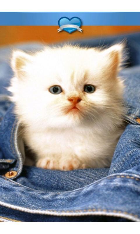 壁纸 动物 狗 狗狗 猫 猫咪 小猫 桌面 480_800 竖版 竖屏 手机