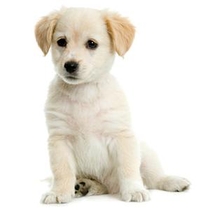 狗的声音app1.7_android手机版下载_宝气软件