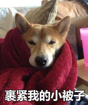 单身狗裹紧小被子表情包