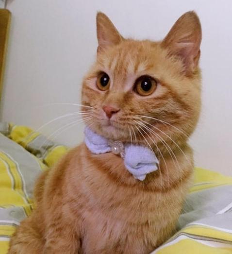 橘猫睡得正香,突然感觉身体被掏空,扭头一看炸了