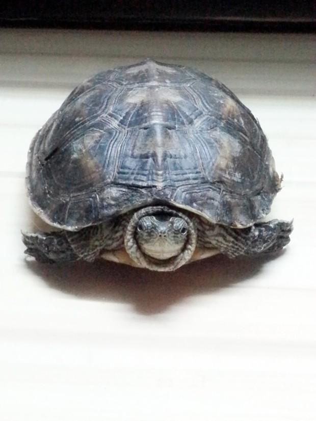 乌龟的种类-及第坊