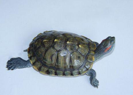 怎么养小乌龟